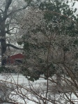 Icy tree!