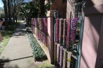 All of the houses in the Garden District were ready for Mardi Gras!